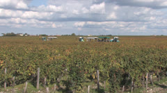 Bordeaux Vineyards Stock Footage