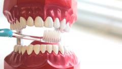 Teeth brush cleans toy jaw Stock Footage