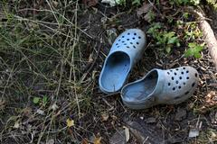 Lost little crocs - stock photo