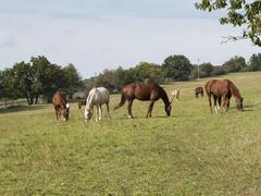 Herd of horses on pasture Stock Photos