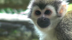 Monkeys, Primates, Zoo Animals, Wildlife, Nature Stock Footage