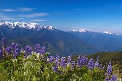 hurricane ridge, olympic national park, washington, usa - stock photo