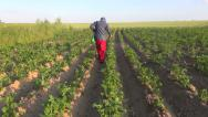 Stock Video Footage of farmer with protective equipment spraying  potato field
