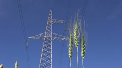 Rye ears in wind and High voltage electrical tower Stock Footage
