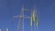 Stock Video Footage of rye ears in wind and High voltage electrical tower