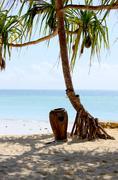 zanzibar white sandy beach and tree - stock photo