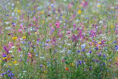 field with an abundance of spring flowers - stock photo