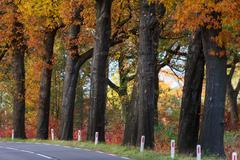 autumn landscape with rural highway in the netherlands - stock photo