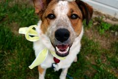 Smiling Dog - stock photo