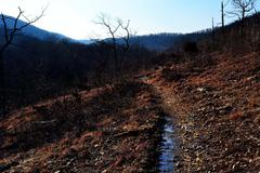 Winding Path Stock Photos