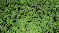 Low flight over lush green rainforest jungle canopy - stock footage