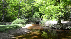 Beautiful slow flowing stream through forest on bright Summer day Stock Footage