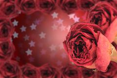 dual dry red rose with frame on blur star bokeh - stock photo
