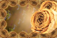 dual dry white rose with frame on blur note bokeh - stock photo