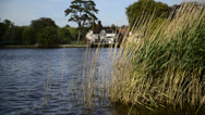 Stock Video Footage of Close up of reed bed on calm lake in Summer