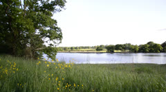Buttercup meadow in Summer with lake in background - stock footage