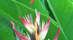Flowers, 3D, Plants, Nature Stock Footage