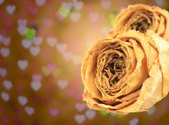 Dual beautiful dry white rose on blur heart bokeh Stock Photos