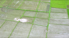 Low flight over partly sowed rice fields Stock Footage