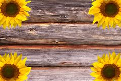 Wooden textured logs background with sunflowers decoration Stock Photos