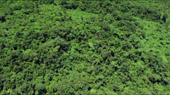 Flight over lush green rainforest jungle canopy - stock footage