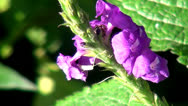 Stock Video Footage of Flowers, Insects, Pollenation