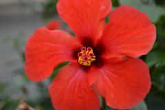 Heavenly flower - stock photo