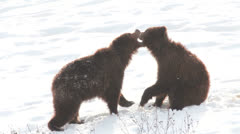 Bear games Stock Footage