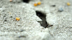 Small ants on the ground Stock Footage