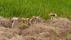 Wild mushrooms  1 Stock Footage