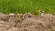 Stock Video Footage of wild mushrooms  1