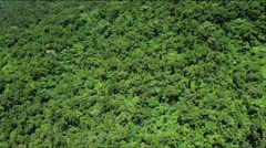 Flight over lush green rainforest jungle canopy Stock Footage
