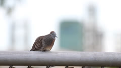 Bird in the city Stock Footage