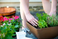 Stock Photo of hands place plant in square brown planter