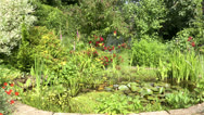 Stock Video Footage of garden pond in summer, england