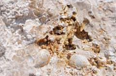 Geological deposits Sarmatian Sea Stock Photos