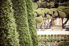 Outstanding cypress trees in retiro park in madrid, spain Stock Photos