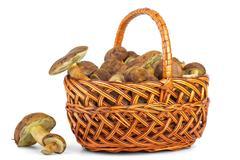 Basket with cepe mushrooms Stock Photos