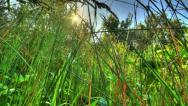 Stock Video Footage of 4k. Sunrise Meadow. HDR Timelapse Shot Motorized Slider