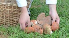Hand pick put red cap mushroom wicker basket grass Stock Footage