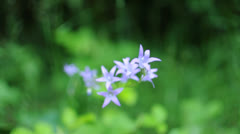 Bluebell Stock Footage
