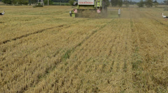Straw fall from combine tractor harvest wheat field storks Stock Footage