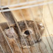 Bunny rabbit in a cage Stock Photos