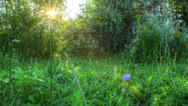 Stock Video Footage of Sunrise Meadow. HDR Timelapse Shot Motorized Slider