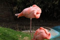 Flamingos Stock Photos