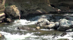 Rivers, Streams, Creeks, Water, Nature Stock Footage