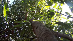 Time lapse tree low sunny leaves cutaway transition nature beauty food       Stock Footage