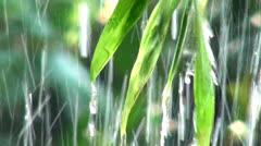 Rain, Rainfall, Leaves, Plants, Weather - stock footage