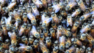 Stock Video Footage of dance of bees
