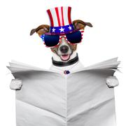 american dog reading - stock photo